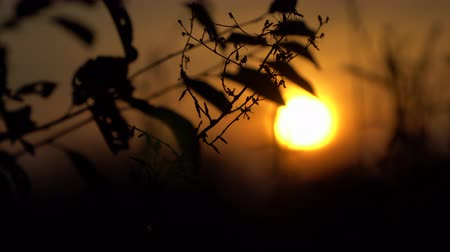 сухой : At sunset the outline of a tree branch.