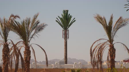 disguised : Tower mobile antennae as palm.