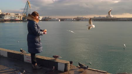 taking flight : Woman feeding seagulls on the waterfront. Early morning. Gulls grab food in flight