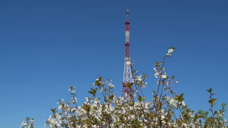 transmitter tower : A television tower against the blue sky. In the foreground there is a flowering tree