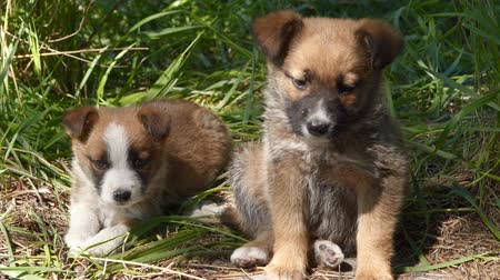 крошечный : Two homeless puppy sitting on the ground.