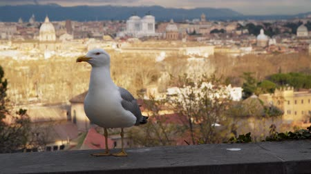 昔ながらの : Seagull on a background of historical buildings.