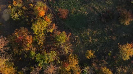 orta hava : Path among autumn trees. Aerial drone shot