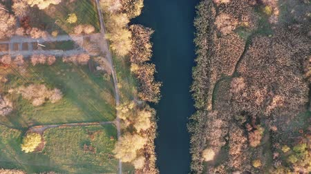 тростник : Top view of a small river. Autumn time. Birds eye view Стоковые видеозаписи