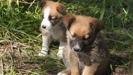 gnaw : Two homeless puppies in the grass. Stray animals