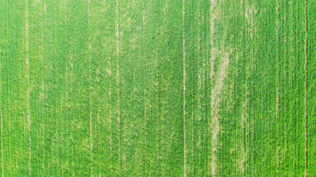 agricultural lands : Aerial view of green spring field.