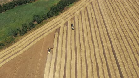 reaping : Harvesting wheat. Agricultural machinery Aerial view Stock Footage