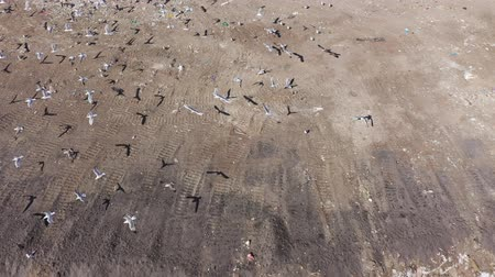 fly away : City landfill. On the top you can see many-flying birds. Aerial view