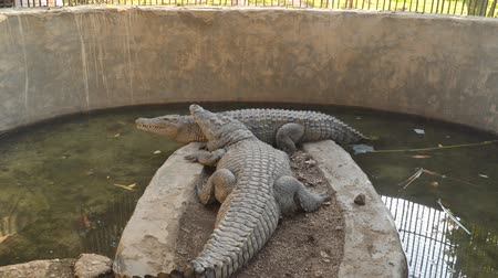 crocodilo : Two crocodiles in an aviary.