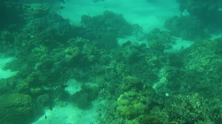 Coral reef with fish in the red sea.
