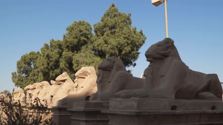 hieroglifa : Ram statues at the entrance to Luxor Temple in Egypt.
