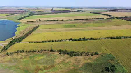 Aerial view. Agricultural fields near the pond