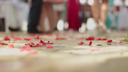 refocus : Rose petals on the road. Focus on the part of the path strewn with beautiful flowers. Symbol of love and marriage