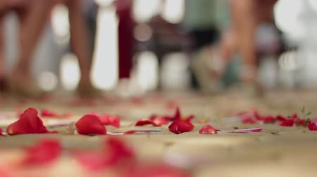 refocus : Rose petals are falling on the road. Focus on the part of the path strewn with beautiful flowers. Symbol of love and marriage