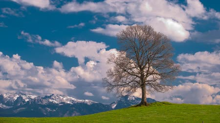 yalnızlık : time lapse of moving clouds behind single tree and alps mountains in Bavaria Stok Video