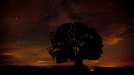 bajor : motion of milky way, clouds and stars behind single tree
