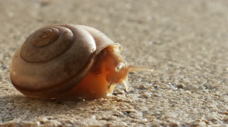 salyangoz : Snail Crawling on Ledge