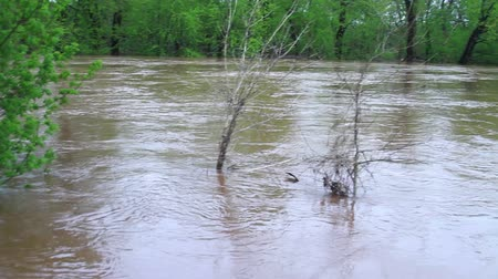 powódź : Fast Moving River at Flood Stage Flooding