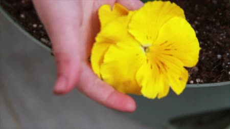 estame : 1215 Yellow Flower being Held.mov