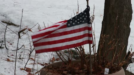 usa : 1124 American Flag Blowing in the Ice and Snow by a Tree.mov