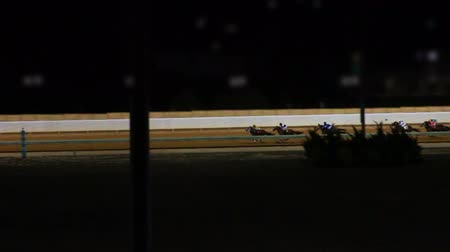 memeli :  Horses Racing Down the Track in Slow Motion  Stok Video