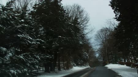 venkovský : Driving in Snow through the Trees, Slow Motion