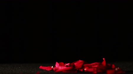 хрупкость : Rose Petals Falling on Ground  Стоковые видеозаписи