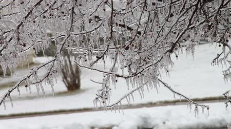 gotejamento : 0190 Ice Storm, Icing, Icicle .mov