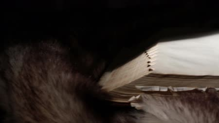стек : Ancient Giant Book Sitting on Fur