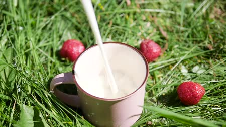 Milk is poured into a mug on green grass in summer Stock mozgókép