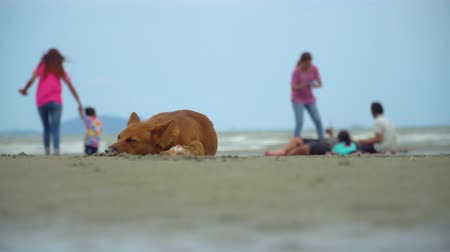 The dog sleeping on the beach on blurred of peoples playing on the beach with blue sky. 무비클립