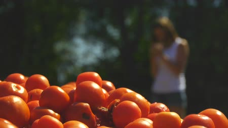 A young woman is standing on a site where a lot of tomatoes lie Stock Footage