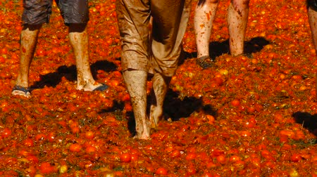 podridão : A battle of tomatoes, People are throwing tomatoes
