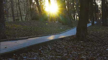 paving : A trail in an empty evening park, a sunset in a city park Stock Footage