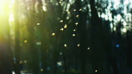 Gnat Stock Footage, Royalty Free Clip, Hd Video Footage