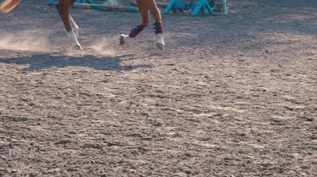stabilní : Foot of horse running on the sand at the training area, close-up of legs of stallion galloping on the ground, slow motion Dostupné videozáznamy