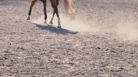 konie : Foot of horse running on the sand at the training area, close-up of legs of stallion galloping on the ground, slow motion Wideo