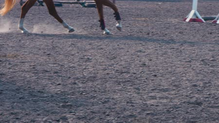 klusat : Foot of horse running on the sand at the training area, close-up of legs of stallion galloping on the ground, slow motion Dostupné videozáznamy