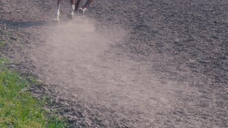 верхом : Foot of horse running on the sand at the training area, close-up of legs of stallion galloping on the ground, slow motion Стоковые видеозаписи