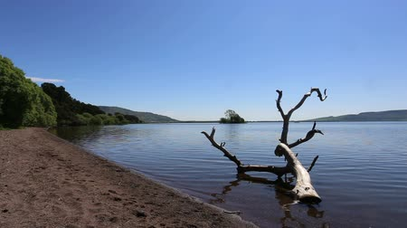 dead tree at Burleigh Sands Loch Leven Scotland Stock Footage