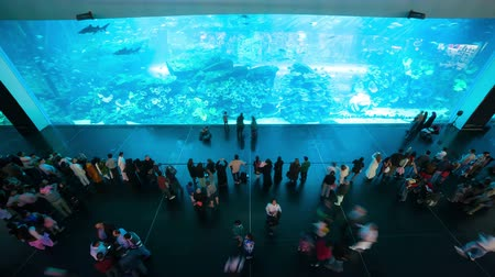 dubai mall aquarium 4k time lapse with a lot of people Stock Footage