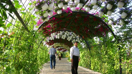 blooming place magic garden 4k time lapse from dubai Stock Footage