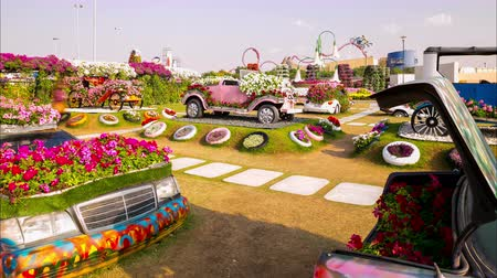 blooming magic garden 4k time lapse from uae