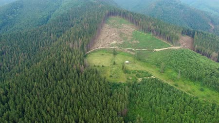 amazonka : Deforestation. Aerial drone view of forest was destroyed by Ukrainian Carpathians. Summer