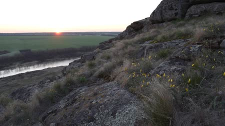 marchs financiers : Spring sunrise over green fields. Tulip flowers on a stone hill