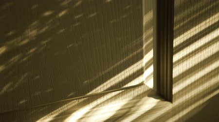 morning : Play of Light and Shadows: sunlight through Jalousie