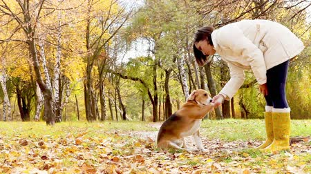 тренировка : Girl with dog best friend in autumnal park Стоковые видеозаписи