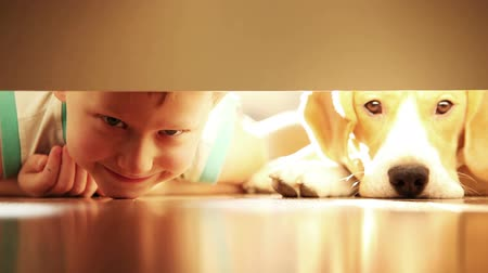 filhotes : Laughing little boy with his best friend beagle dog under the bed
