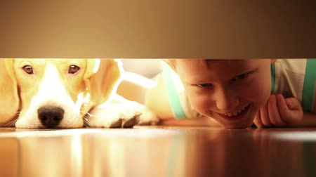filhotes : Little boy with his best friend beagle dog under the bed