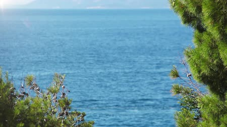 rhodes : Nice travel background: foreground pine branches with deep blue sea background Stock Footage